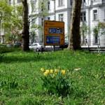 Tulpen auf der Westseite des Platzes.