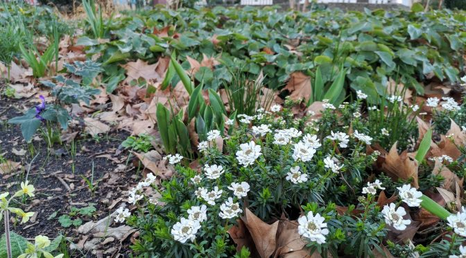 "Aktionstag""Gärtnern im Kiez"" am 04. April 2020 – entfällt"