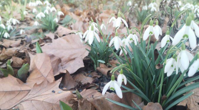 "Aktionstag ""Gärtnern im Kiez"" am Samstag 13. März2021"